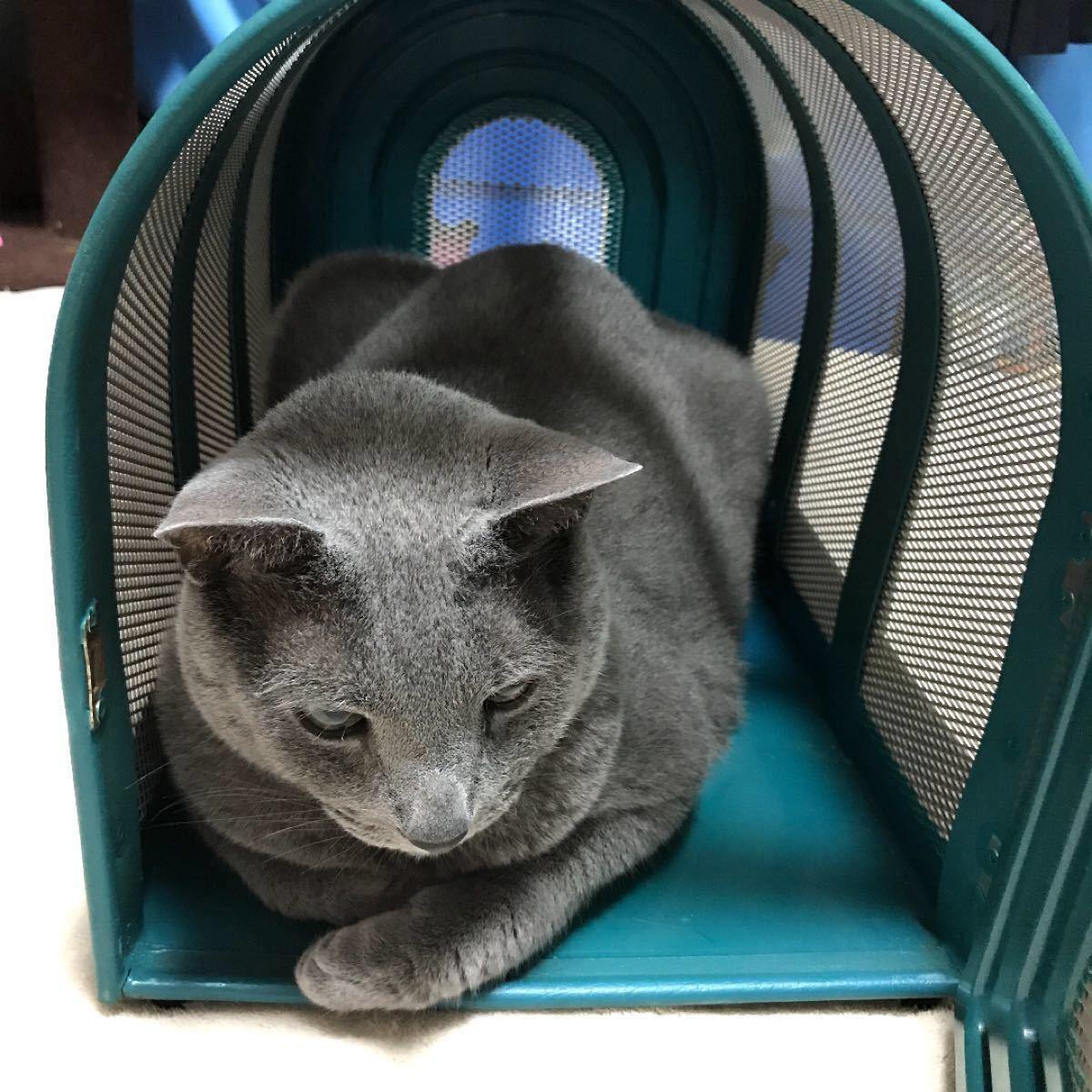 ペット用キャリーバッグ プラスチック製