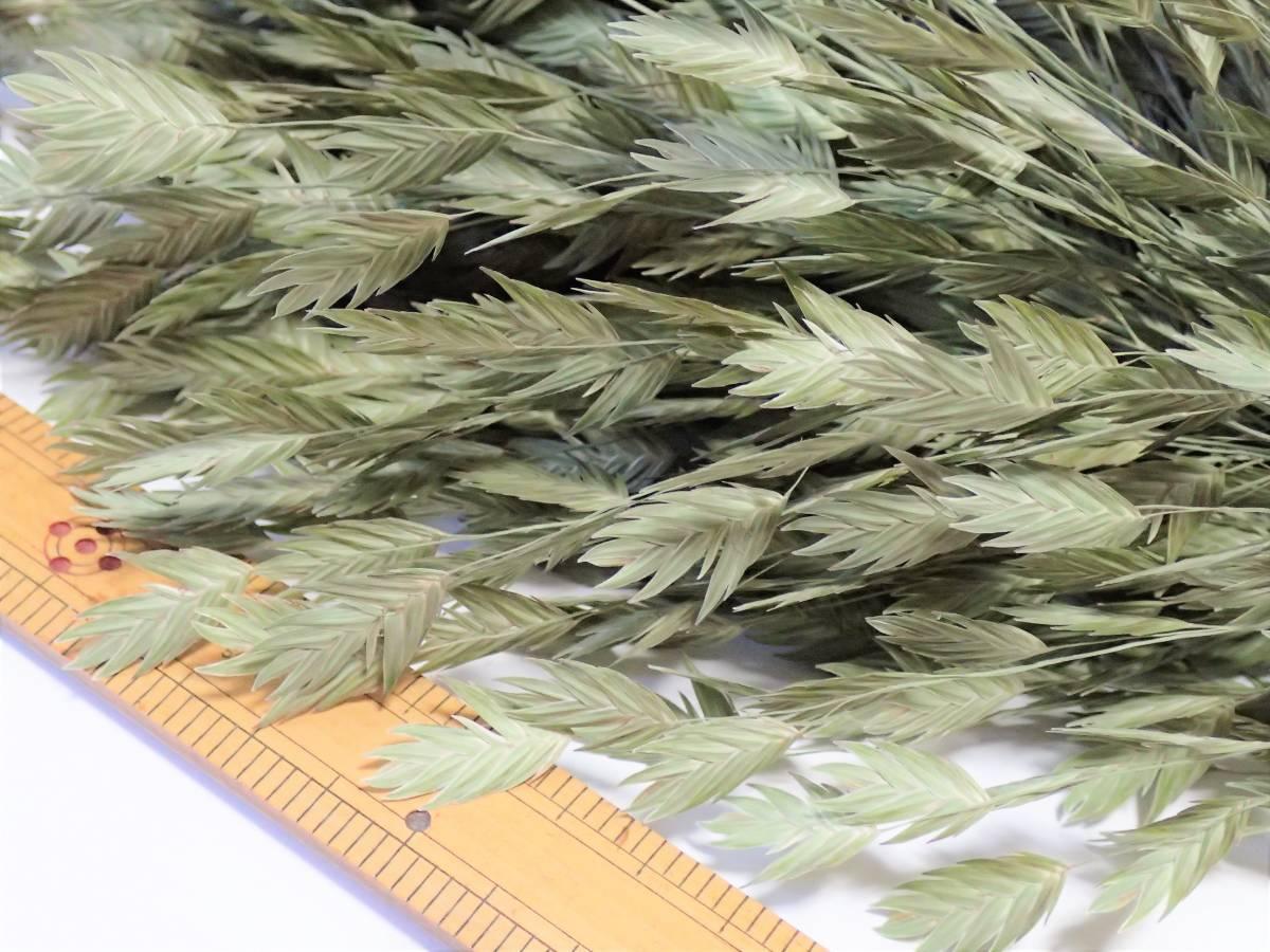 【即決】 ドライフラワー 「 ワイルドオーツ 30本 」 今年摘み取り 無着色 自然乾燥 スワッグ リース ハーバリウムなど 花材に 西洋小判草 _画像4