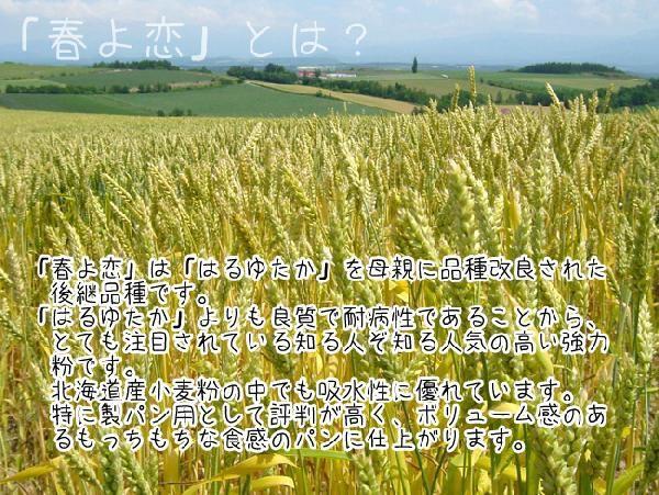 北海道産強力粉 春よ恋450g(春よ恋100%)蕎麦打ち つなぎ用小麦粉 製パン用小麦粉 そば打ちつなぎ用こむぎこ メール便対応_画像6