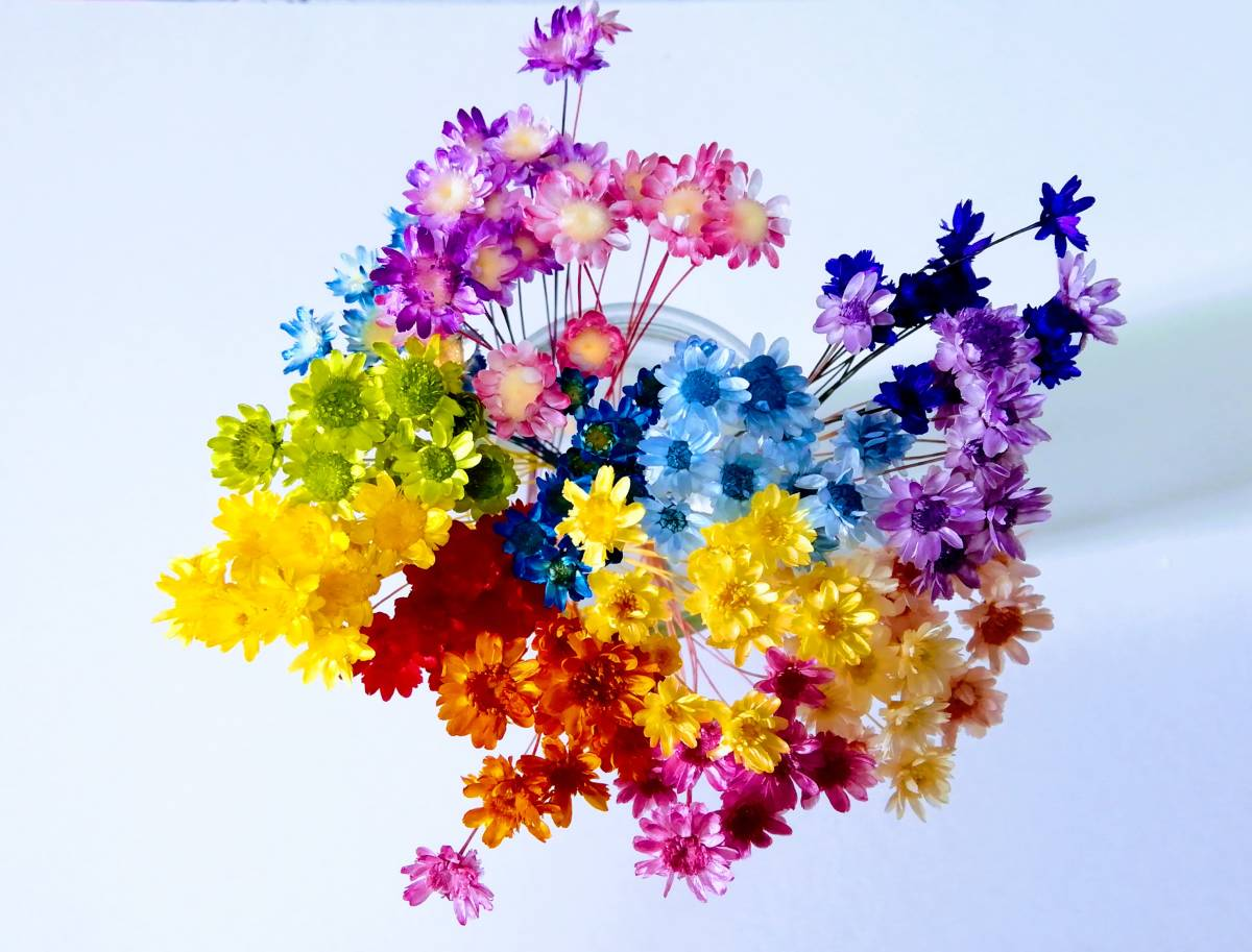 ●スターフラワー・ブロッサム 15色 150本 レジン用封入素材 ハーバリウム印鑑 花材 少量 13●_画像2