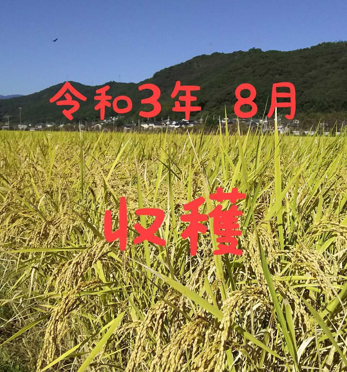 送料込み 令和3年産 高知県産 新米 コシヒカリ 米ぬか 10㎏(袋込み)_画像3
