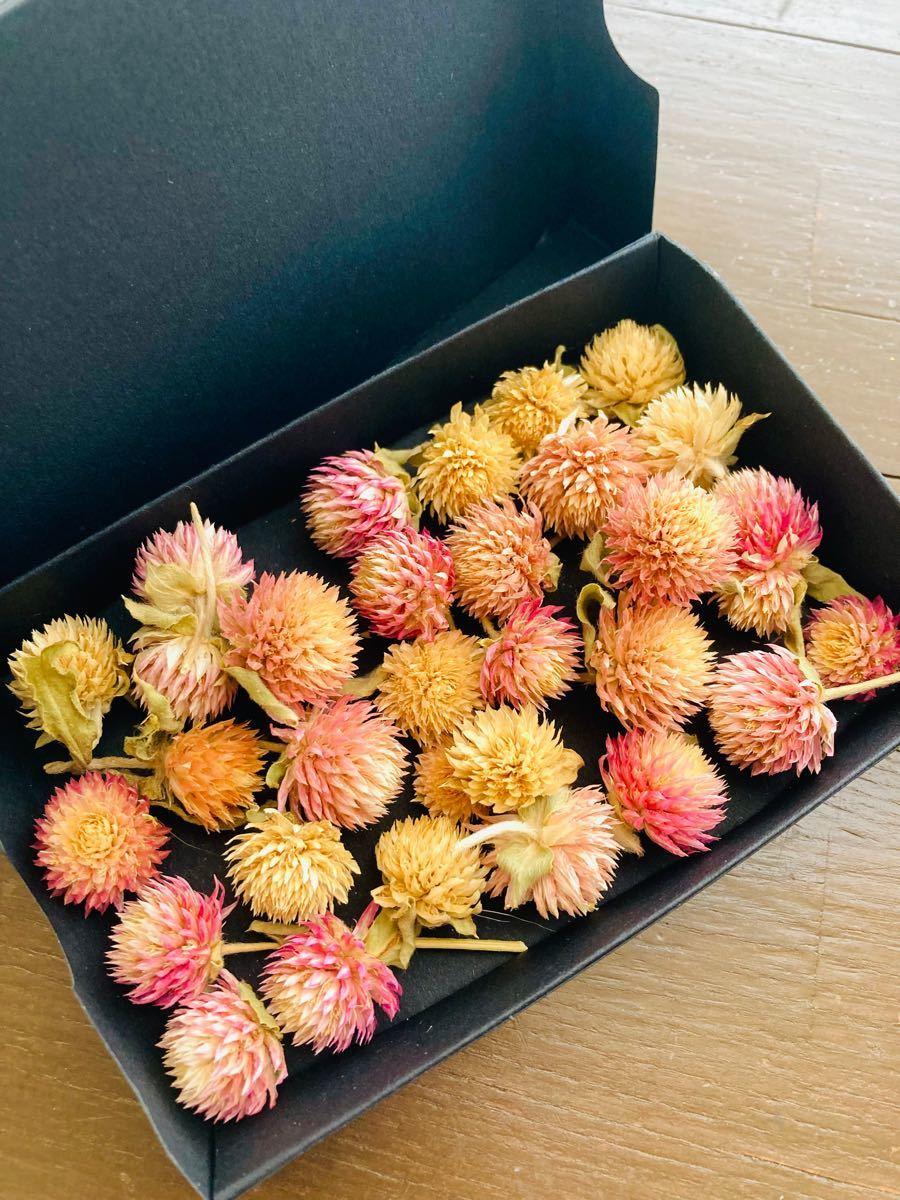 千日紅詰合せ ドライフラワー 花材 ハンドメイド 小花  ハーバリウム アクセサリー アロマサシェ