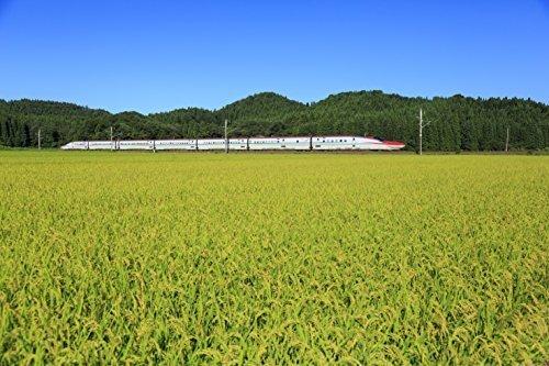 無洗米5kg 【精米】 580.com 秋田県産 無洗米 あきたこまち 5kg 令和2年産_画像4