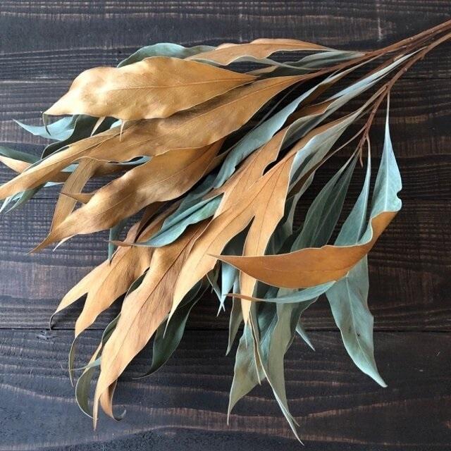 グレビレア バイレヤナ約50cm 3本 ドライフラワー 花材 そのままインテリアやスワッグ、リースなどに 星月猫_画像1
