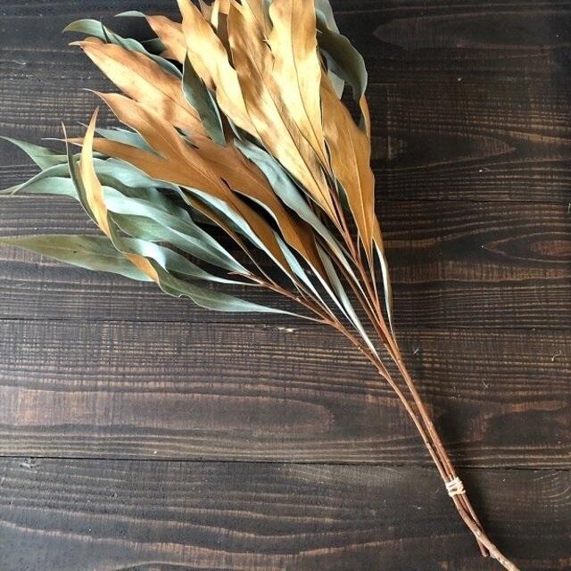 グレビレア バイレヤナ約50cm 3本 ドライフラワー 花材 そのままインテリアやスワッグ、リースなどに 星月猫_画像3