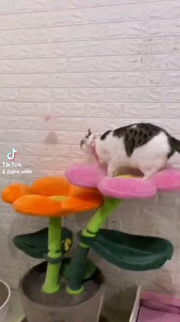 仔猫 猫ちゃん 猫 おもちゃ 猫じゃらし 自力で遊ぶ猫おもちゃ ヒット商品大人気 運動不足解消