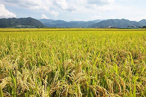 5kg 【精米】山形県産 白米 つや姫 5kg 令和元年産_画像7
