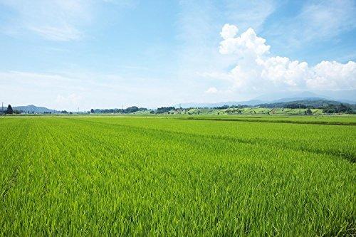5kg 【精米】山形県産 白米 つや姫 5kg 令和元年産_画像6