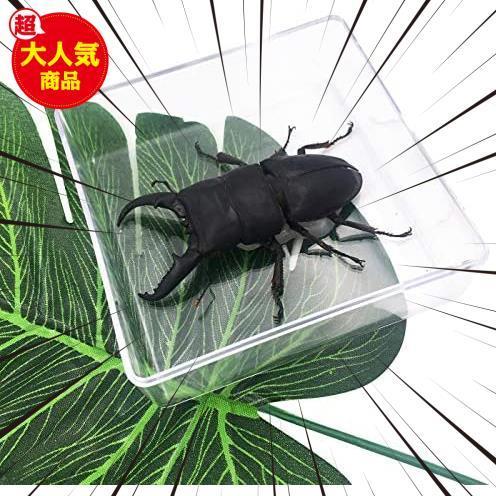 【送料無料】★色:Beetle_Stag1★ 実物大クワガタムシ 昆虫標本 子ども向け 科学STEM教育 ギフト_画像1