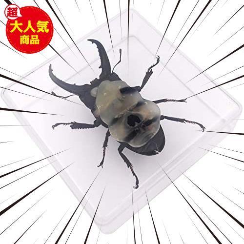 【送料無料】★色:Beetle_Stag1★ 実物大クワガタムシ 昆虫標本 子ども向け 科学STEM教育 ギフト_画像6