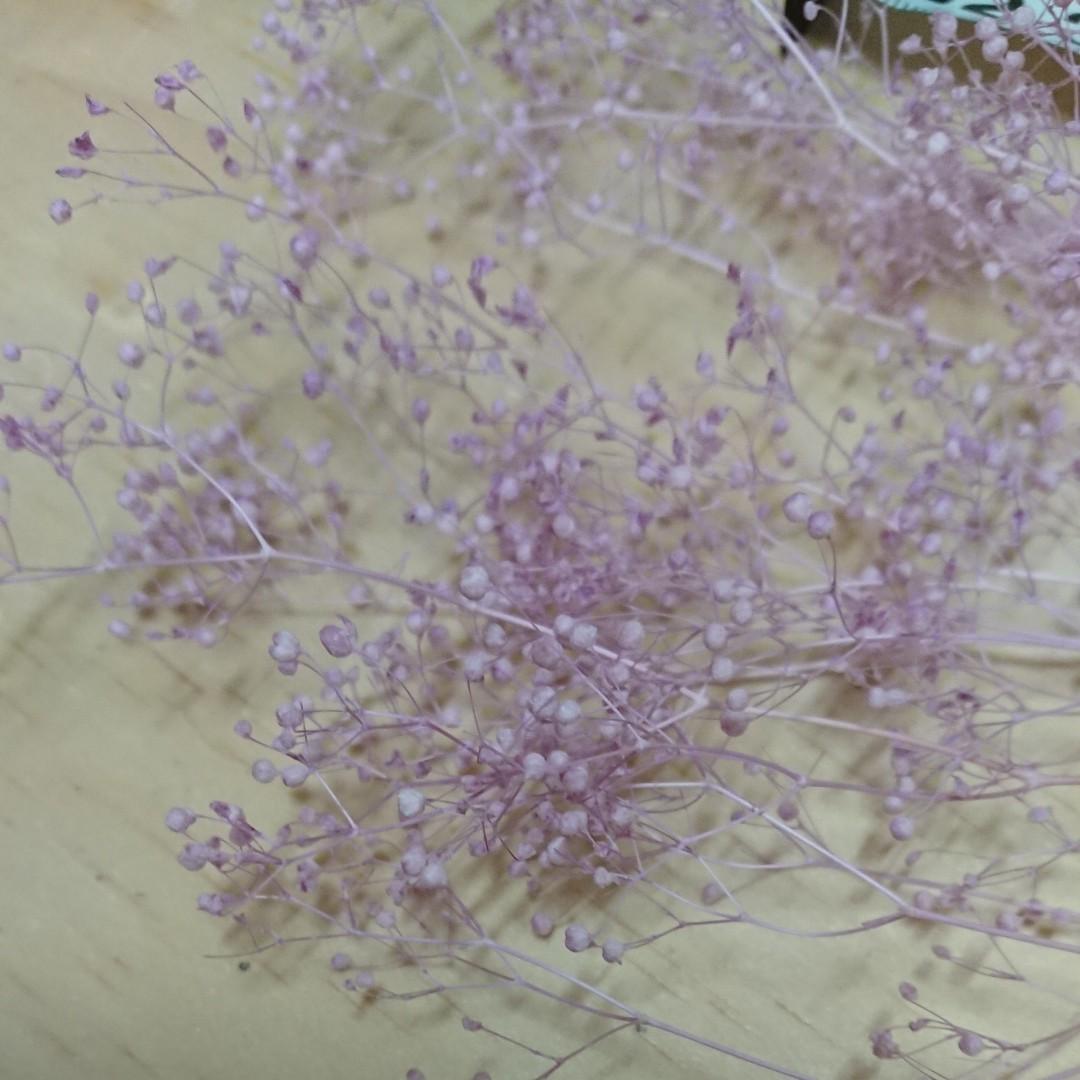 【訳】かすみ草 カスミ草 パープル プリザーブドフラワー 花材 ドライフラワー ハーバリウム ハンドメイド はなかんむり 大地農園