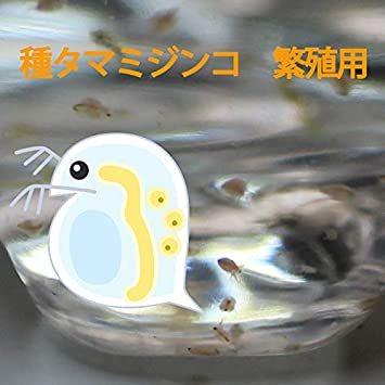 タマミジンコ 培養用 種ミジンコ 生体100匹程度 金魚・めだか・熱帯魚等の生餌 エサ 【クロレラ水 200mlに入れて発送】_画像1