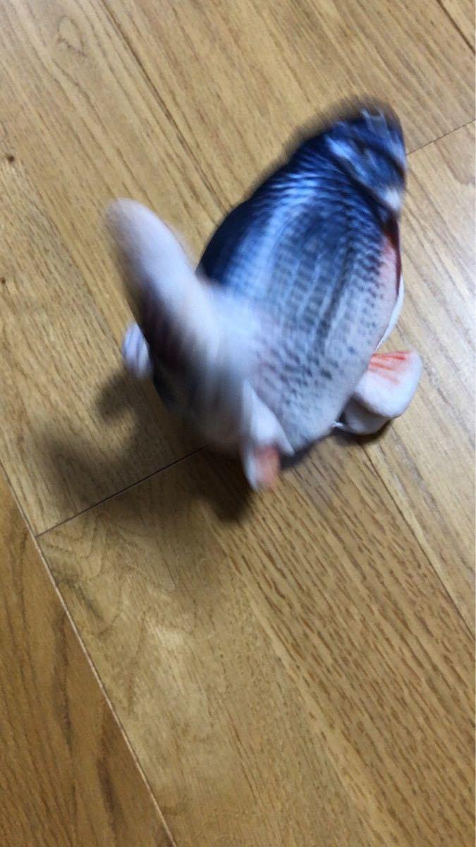 2個セット【新品】猫のおもちゃ 電動魚 猫用品 リアルな移動式の魚のおもちゃ