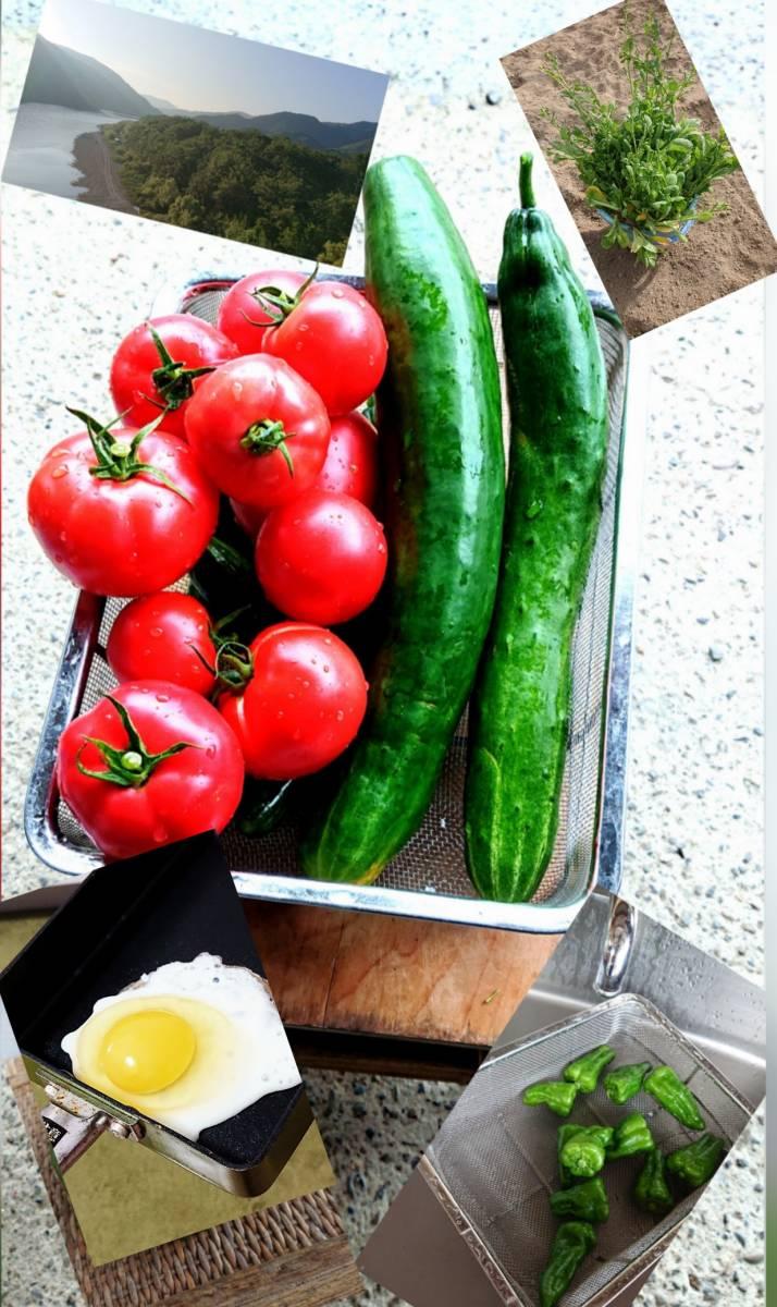 ■■純種烏骨鶏の有精卵⑦個+保証卵①個■■_◎無農薬野菜も作っています♪