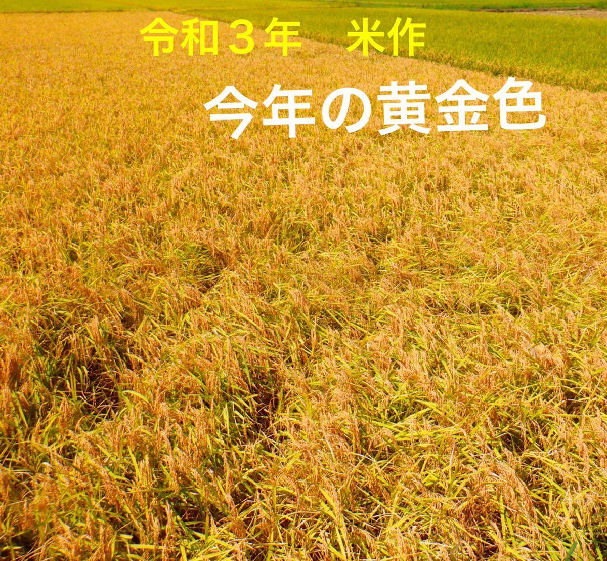 減農薬米 令和3年新米 三重県産コシヒカリ 玄米20キロ 10kg×2袋 全国送料込_画像2