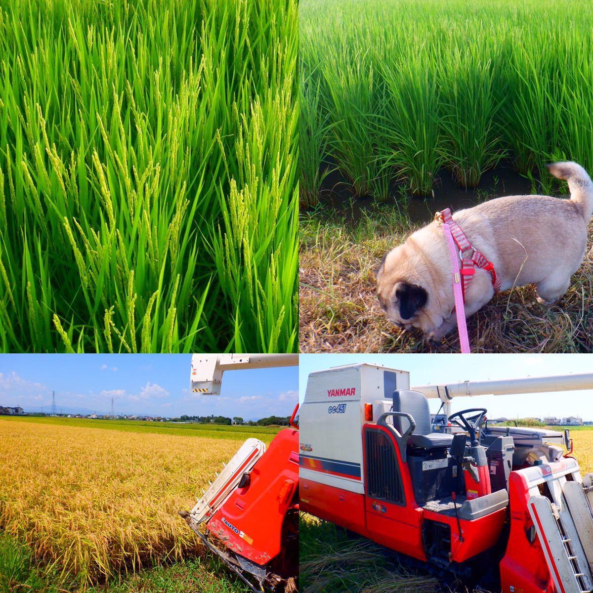 減農薬米 令和3年新米 三重県産コシヒカリ 玄米20キロ 10kg×2袋 全国送料込_画像7