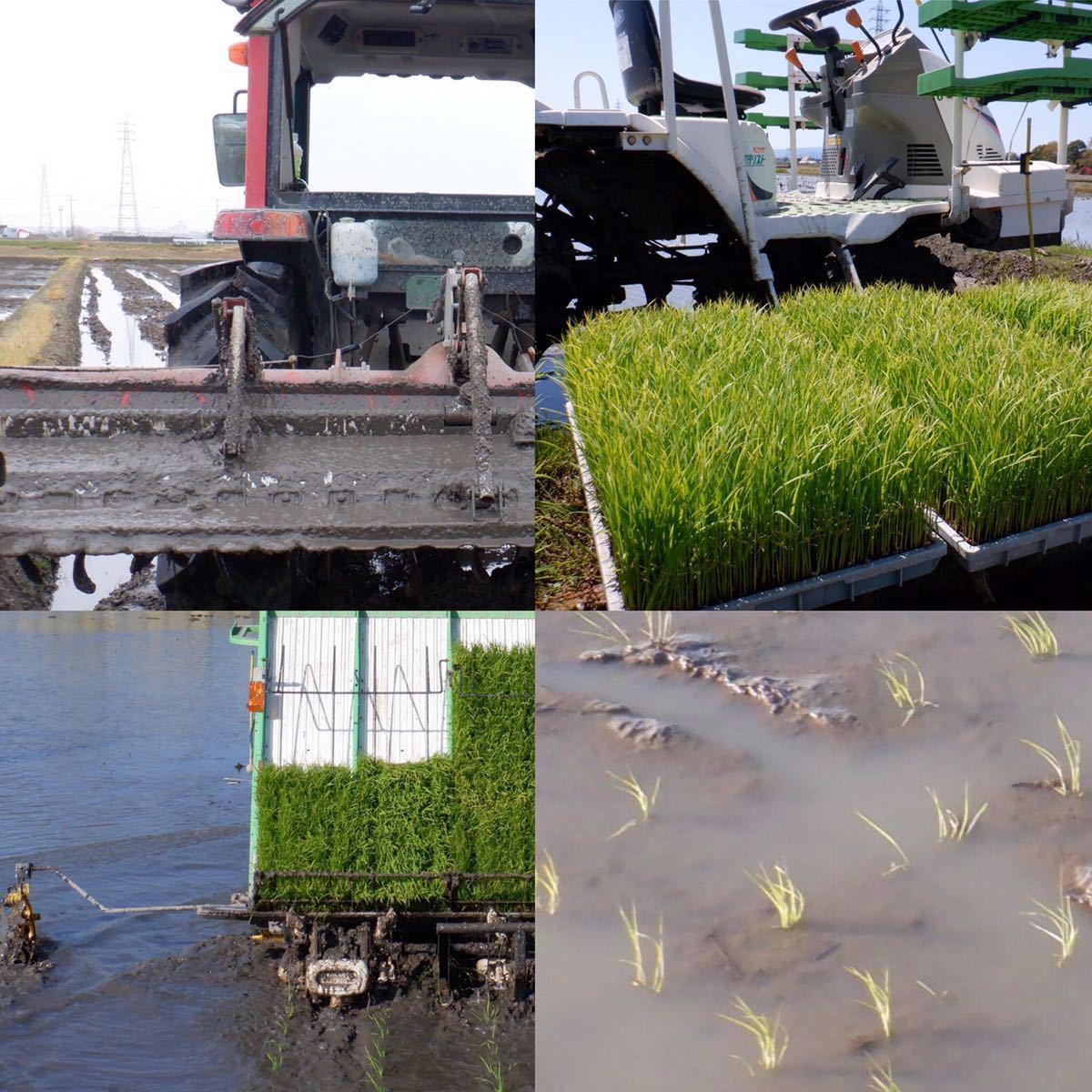 減農薬米 令和3年新米 三重県産コシヒカリ 玄米20キロ 10kg×2袋 全国送料込_画像4