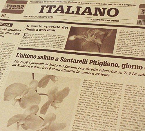 ショコラ 【フジパック】 イタリア 新聞紙柄 包装紙 ラッピング 100枚 おしゃれでかわいいデザイン (ショコラ)_画像1