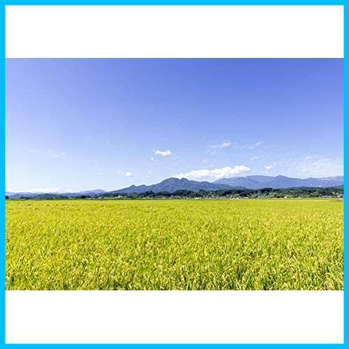 【精米】 宮城県産 白米 ひとめぼれ 5kg 令和2年産_画像5