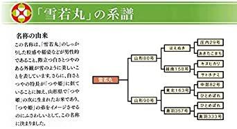 5kg 【精米】 山形県産 白米 雪若丸 5kg 令和2年産_画像6