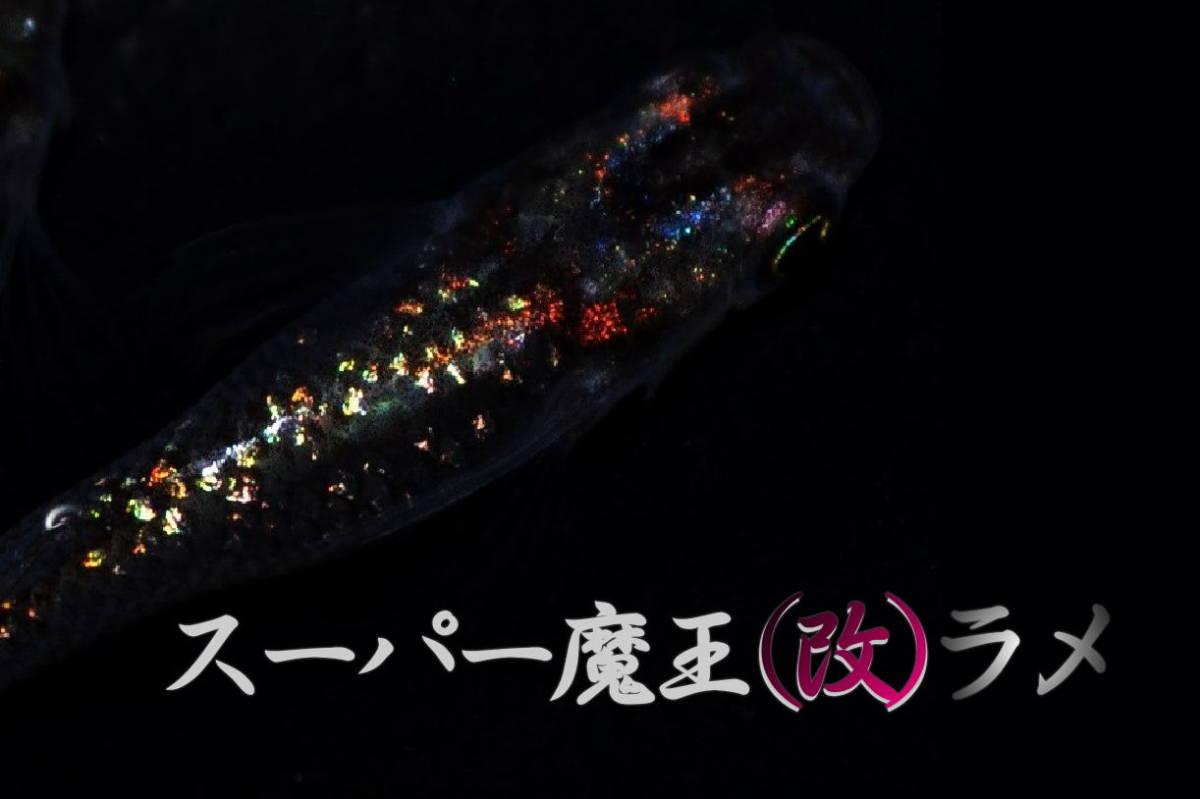 まりもめだか]広島プロショップ め組様血統 スーパー魔王 改 ラメ めだかの卵15個+α 有精卵 メダカの卵 めだか メダカ 卵 めだか卵 魔王改_光彩、ラメ完璧な親達です♪