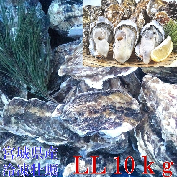 牡蠣 殻付き 牡蠣 あす楽対応!LLサイズ10kg(約62粒)冷凍便送料無料!10キロ 宮城県産 殻付き牡蠣 殻付き 殻付 カキ 加熱用 _画像2