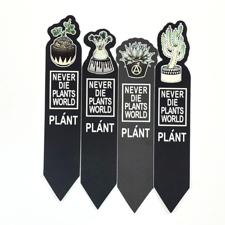 塊根植物パキポディウムグラキリス 亀甲竜園芸ラベル 20枚セット_画像1