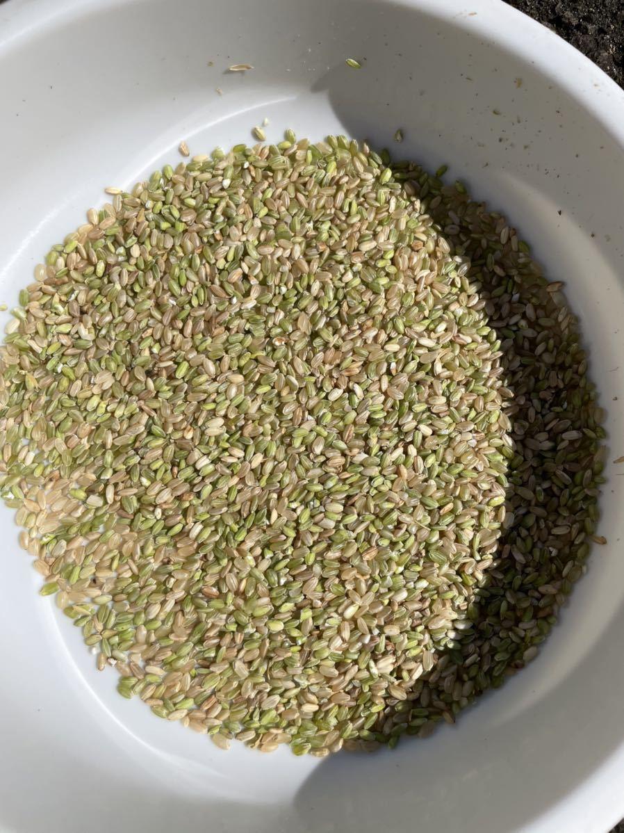 令和3年秋田県産あきたこまちくず米餌などに30kg_画像1
