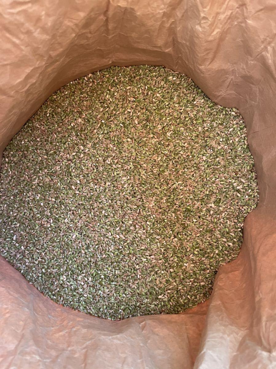 令和3年秋田県産 あきたこまちくず米餌などに 30kg_画像2