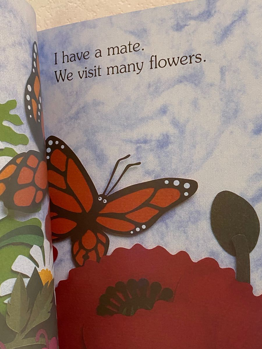 英語絵本 I'm a Caterpillar