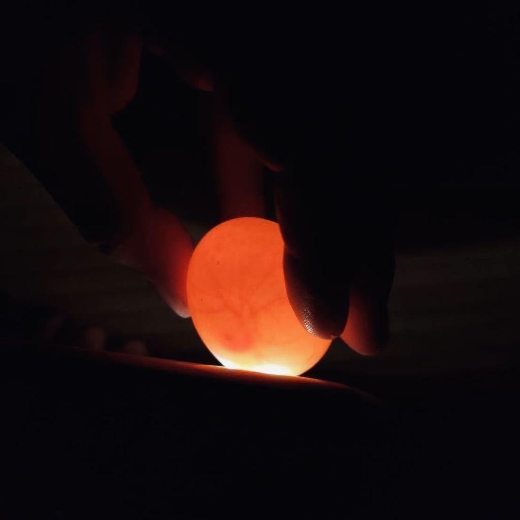 【目髙ノ雫】 コールダック 卵 1 個 9/18 産卵 有精卵_血管が見えると有精卵確定です