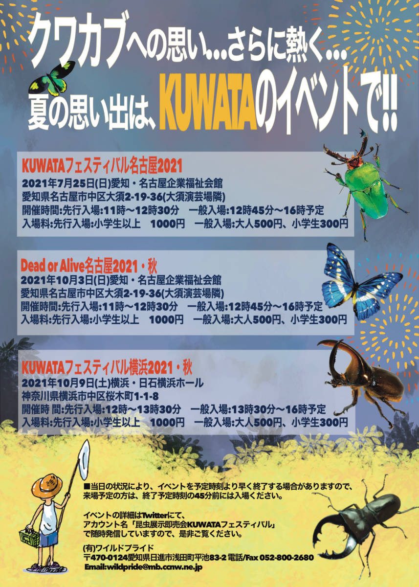 昆虫標本★スマトラ島産フォルニカートスネブト♂45ミリ_画像4