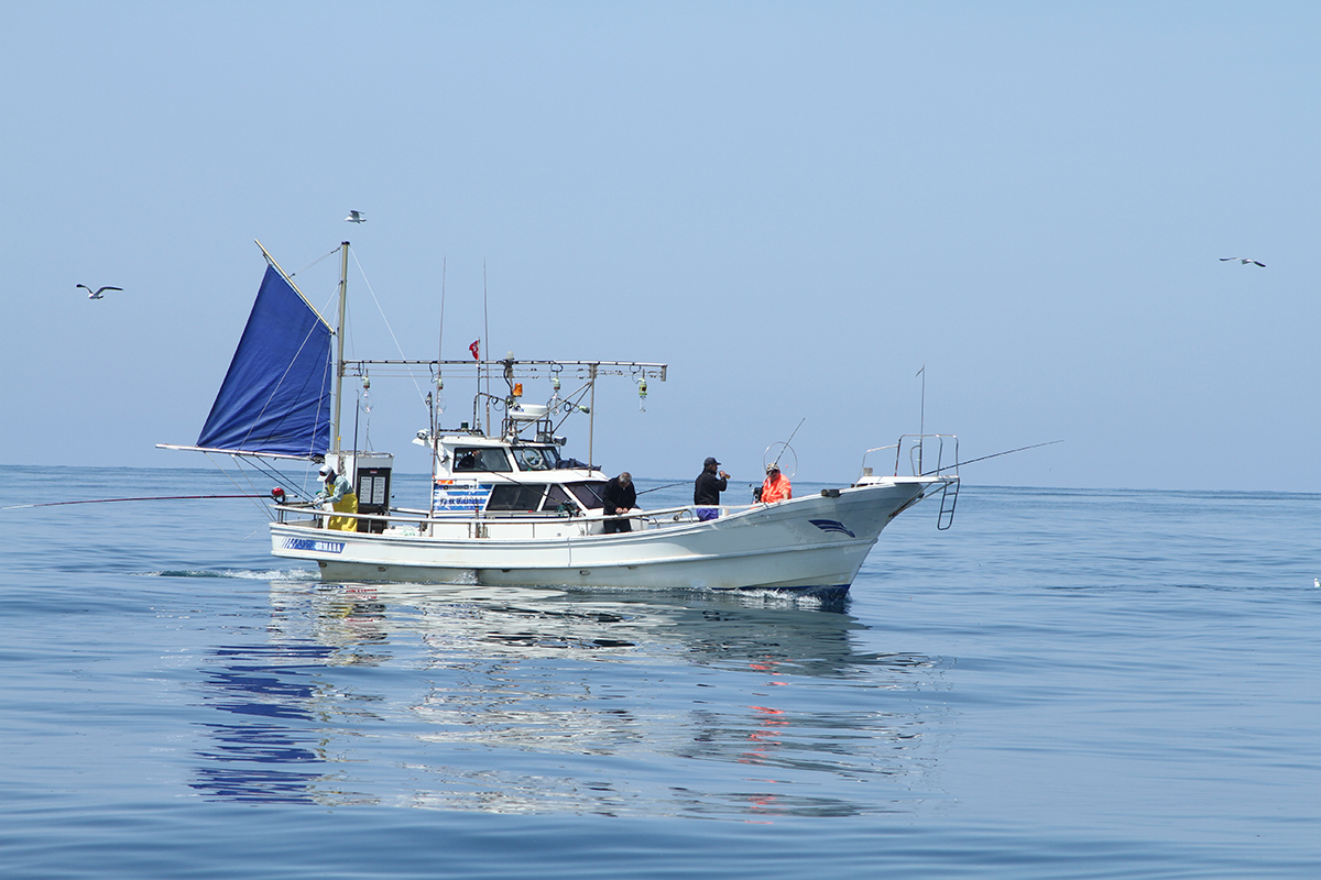 「YAMAHA DY36 ヤマハ 遊漁船/釣り船仕様 【2022年3月まで陸上保管可能】動画有り」の画像1