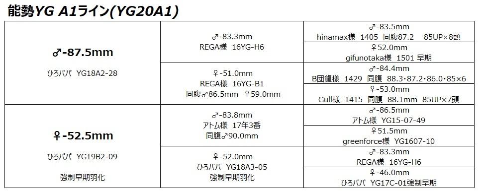 【能勢YG血統】オオクワガタ 89.2mm・88.3mm同腹 新成虫♀57.0mm(YG20A1-14)単品 難あり_画像7