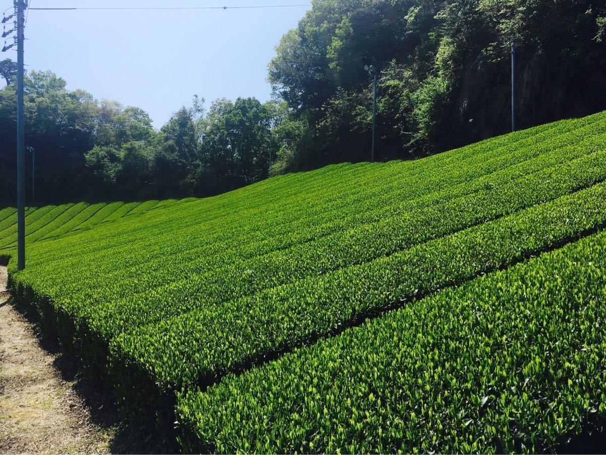 中尾農園 和紅茶ティーバッグ 大和茶 国産紅茶