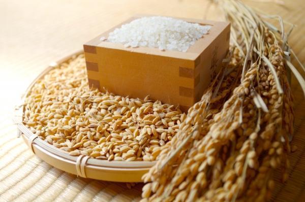 愛媛 三間産 伊達米 減農薬 特別栽培米 令和2年産 ( もち米 ) 玄米 30kg 送料無料 百姓から直送 宇和海の幸問屋_収穫