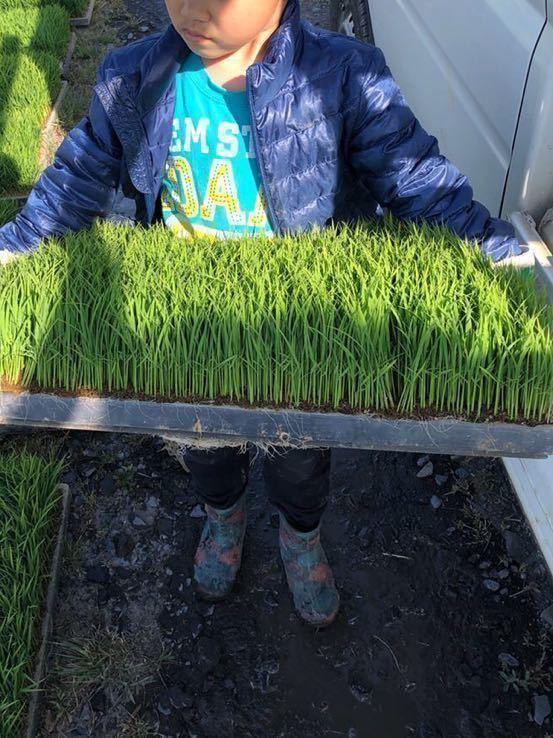 令和2年産 宮城県産 ひとめぼれ 特別栽培米 玄米20Kg 精米可 小分け可_画像3