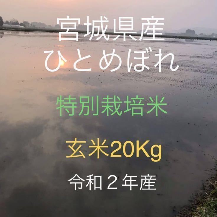 令和2年産 宮城県産 ひとめぼれ 特別栽培米 玄米20Kg 精米可 小分け可_画像1