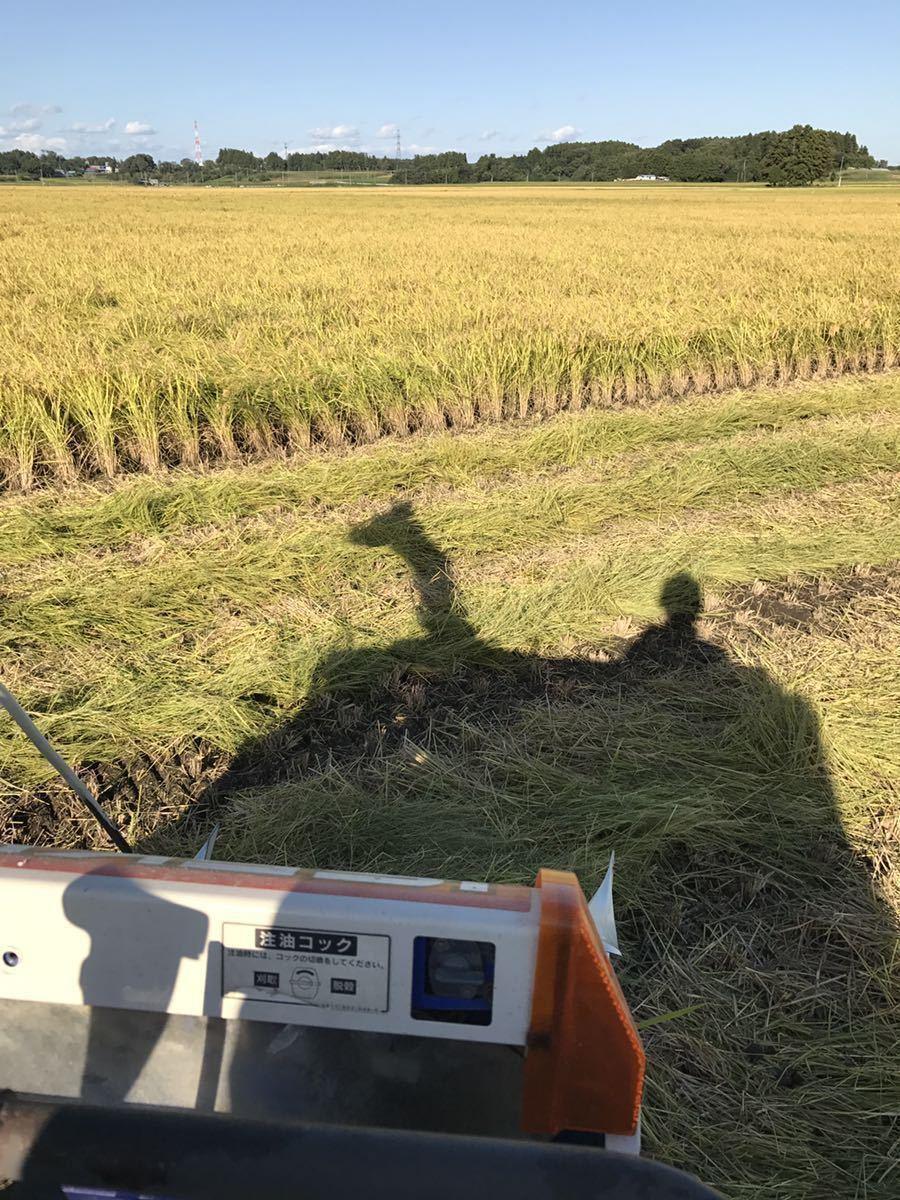 令和2年産 宮城県産 ひとめぼれ 特別栽培米 玄米20Kg 精米可 小分け可_画像5