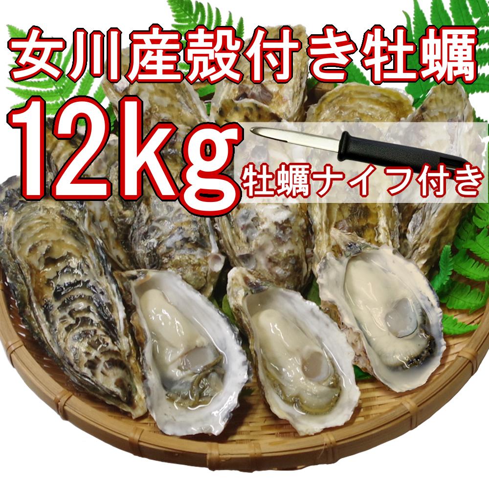 【産地直送】冷凍殻付き牡蠣 加熱用 Lサイズ 12kg(90~100個程度) 宮城県女川産 牡蠣ナイフ、軍手付き COL-OO12_11_画像1