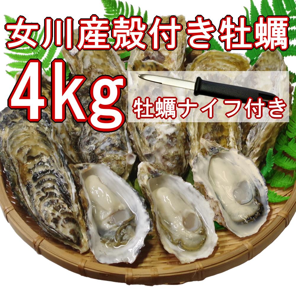 【産地直送】冷凍殻付き牡蠣 加熱用 Lサイズ 4kg(30個前後) 宮城県女川産 牡蠣ナイフ、軍手付き COL-OO4_11_画像1
