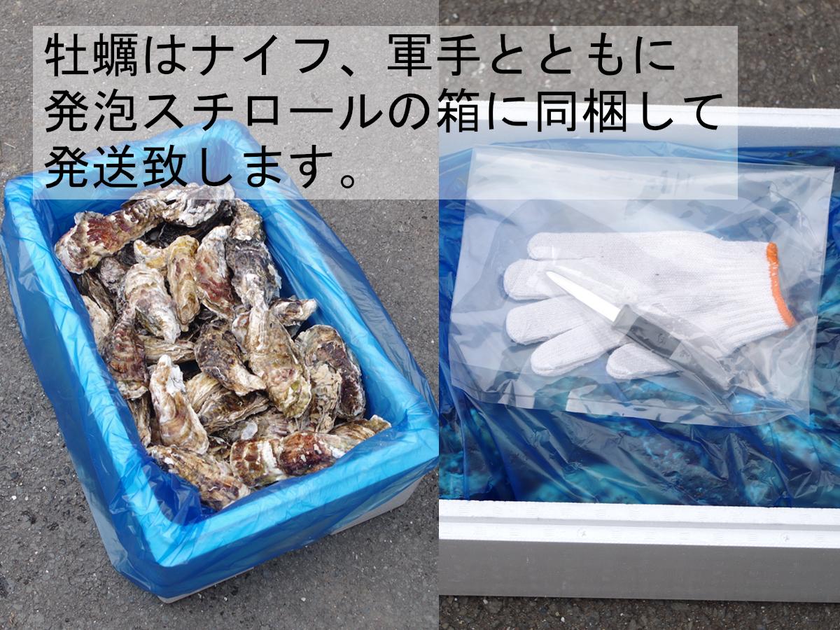 【産地直送】冷凍殻付き牡蠣 加熱用 Lサイズ 12kg(90~100個程度) 宮城県女川産 牡蠣ナイフ、軍手付き COL-OO12_31_画像4