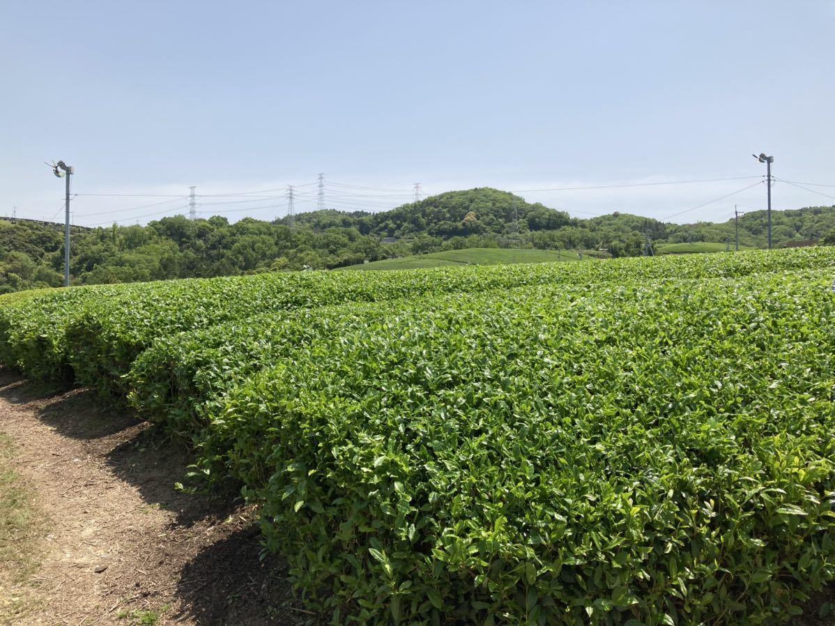 「新茶3種類飲み比べセットS」宇治茶100% 無農薬・化学肥料不使用 2021年産_画像5
