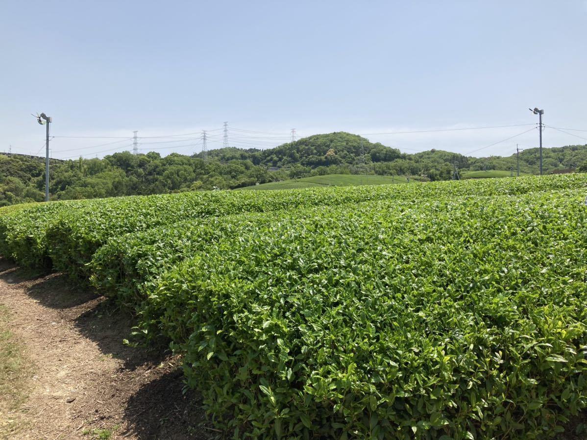 「新茶2種類飲み比べセットS」宇治茶100% 無農薬・化学肥料不使用 2021年産_画像5