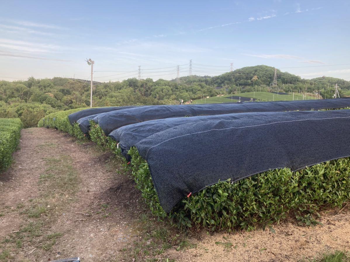 「新茶2種類飲み比べセットS」宇治茶100% 無農薬・化学肥料不使用 2021年産_画像4