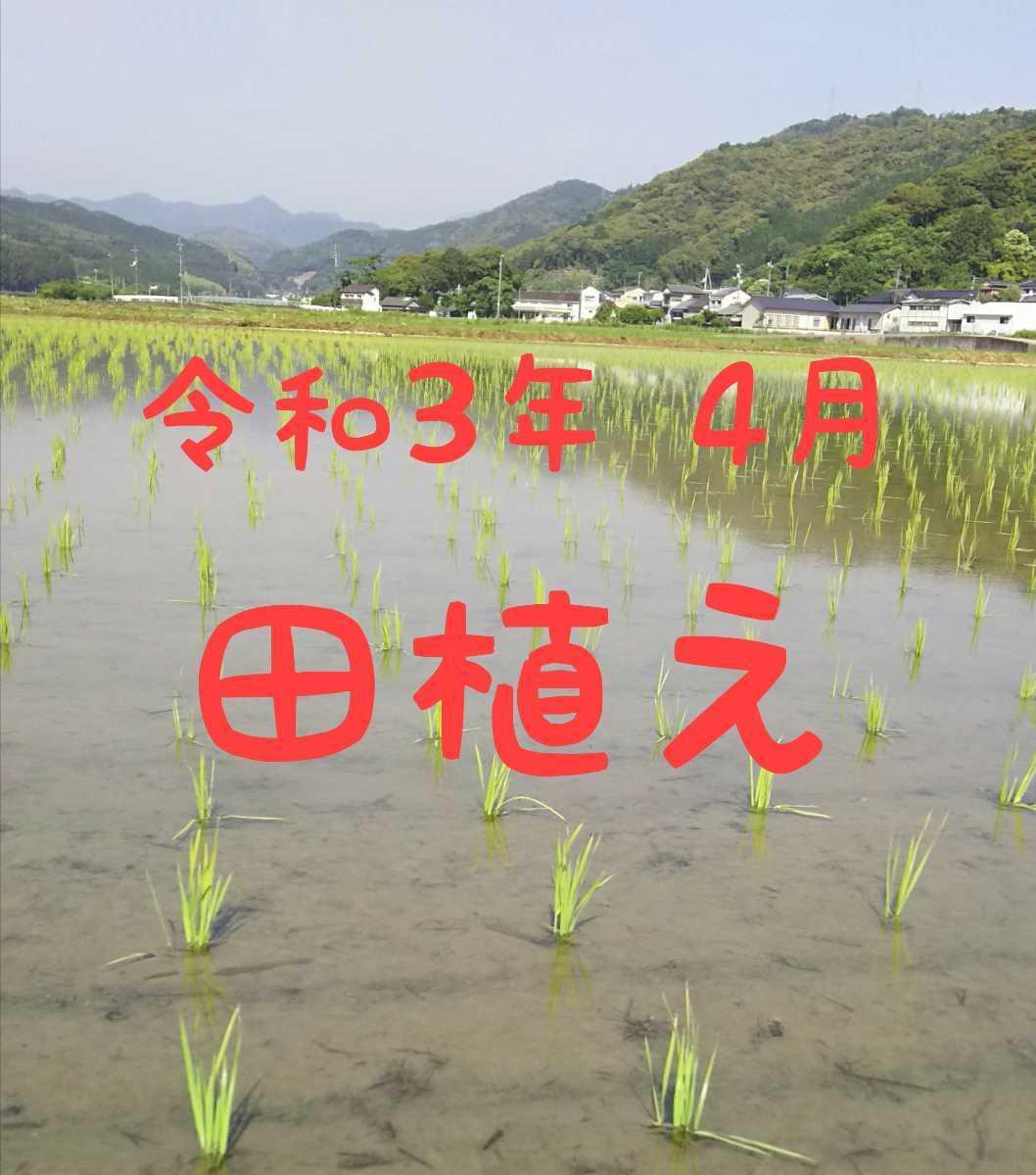 送料込み 令和3年産 高知県産 コシヒカリ玄米5㎏(袋込み)_画像2
