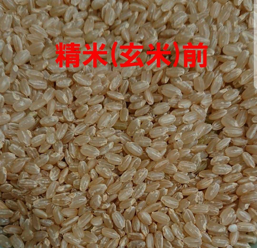 送料込み 令和3年産 高知県産 コシヒカリ玄米5㎏(袋込み)_画像5