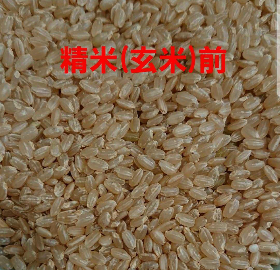 送料込み 令和3年産 高知県産 コシヒカリ玄米10㎏(袋込み)_画像5
