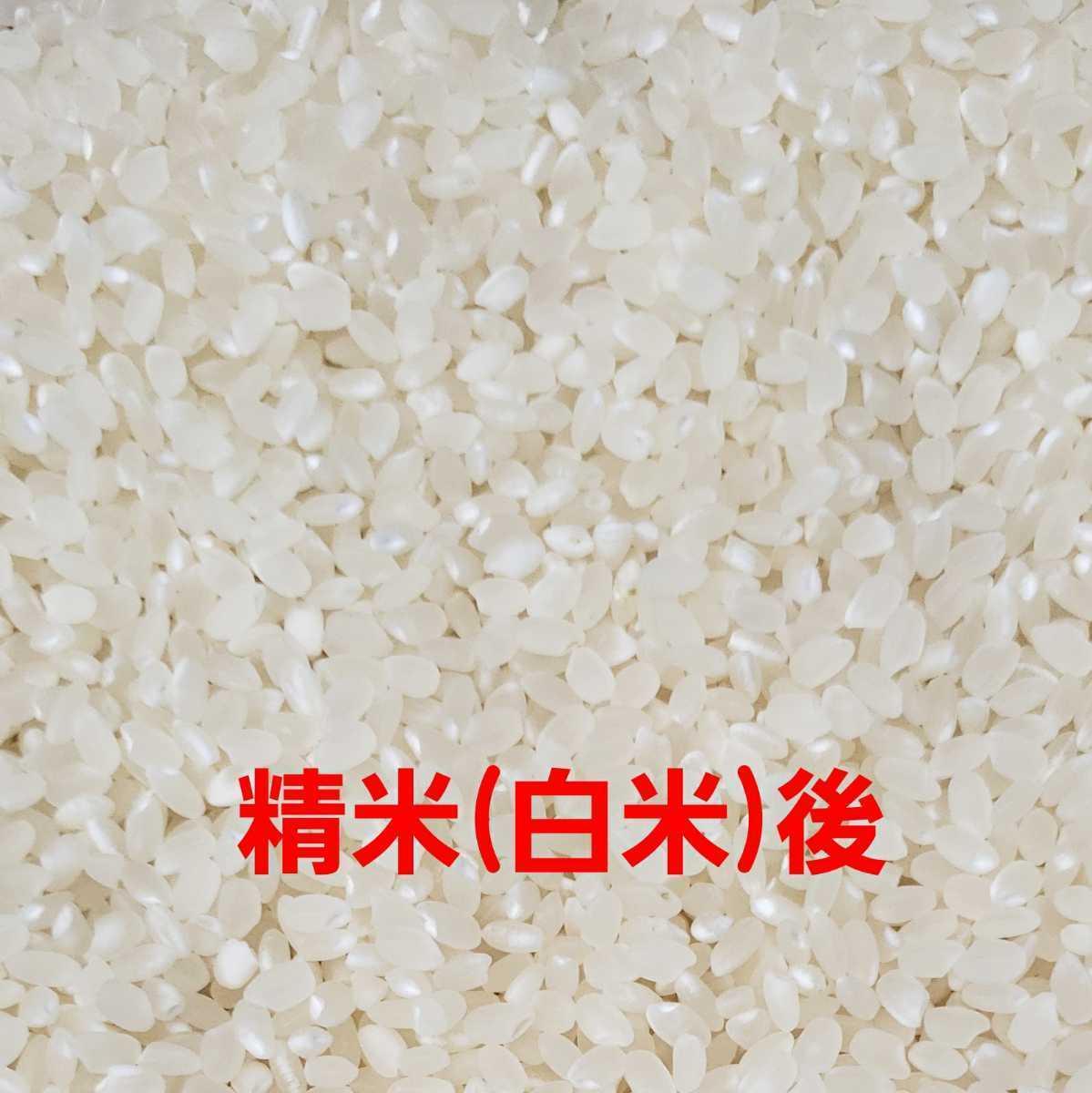 送料込み 令和3年産 高知県産 コシヒカリ玄米10㎏(袋込み)_画像6
