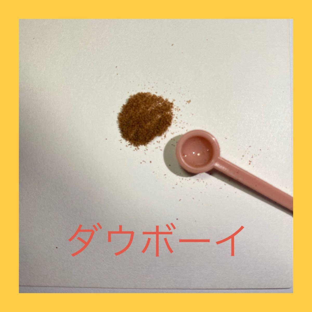 胞子 5種 セット ビカクシダ コウモリラン